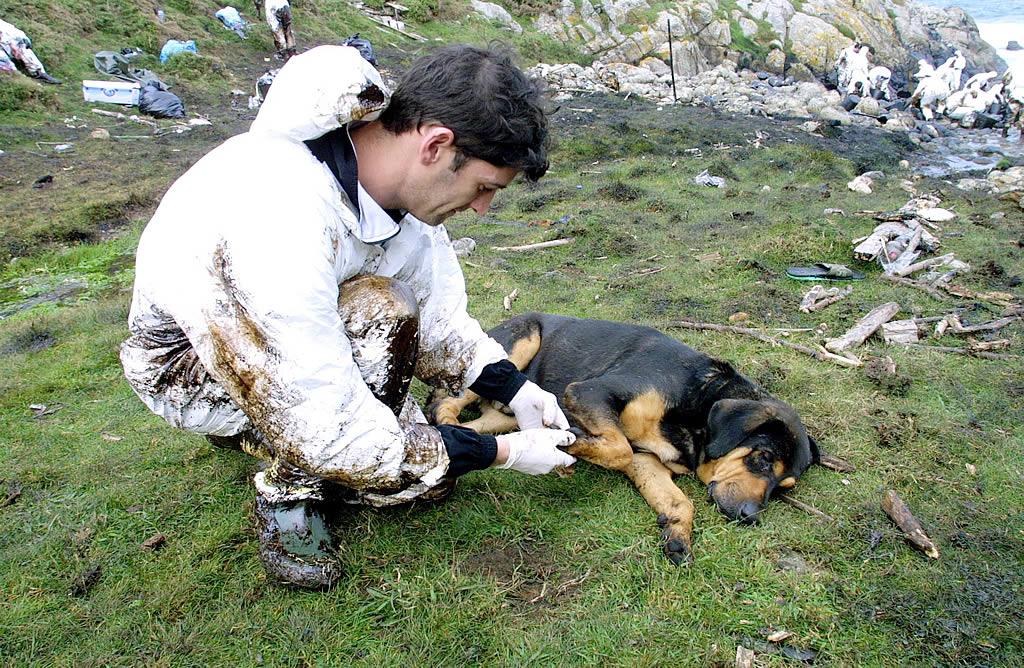 Un voluntario le limpia las patas llenas de fuel de un perro en Touriñán (Muxía). <br><b>José Manuel Casal</b>