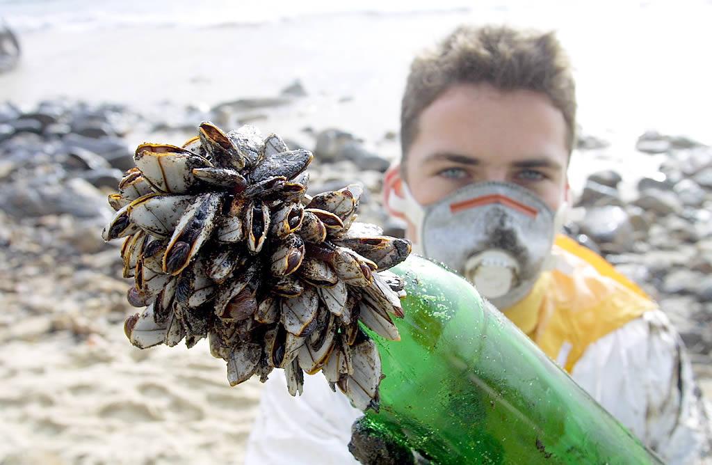 Un voluntario francés muestra un puñado de percebes cubiertos de fuel en la playa de Langosteira (Fisterra). <br><b></b>José Manuel Casal