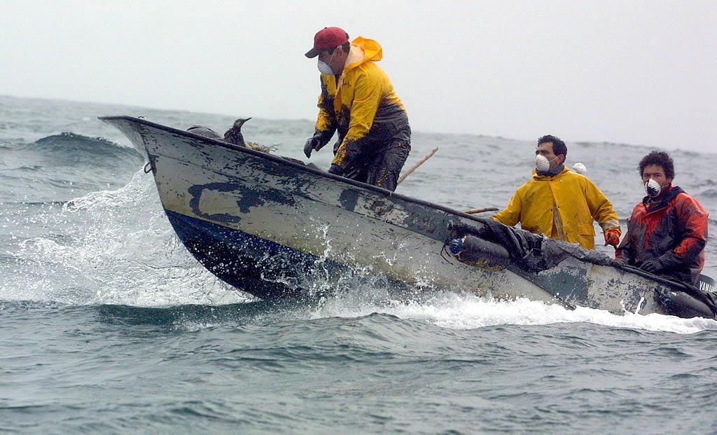 03/12/2002 <br>Los marineros salen en lanchas «pulpeiras». No solo recogen chapapote sino aves petroleadas. Se acercaban a nuestro barco, al barco de los periodistas, para que nos hiciésemos cargo de ellas. En la foto un ave, en la proa, parece dialogar con uno de los pescadores <br>Vítor Mejuto