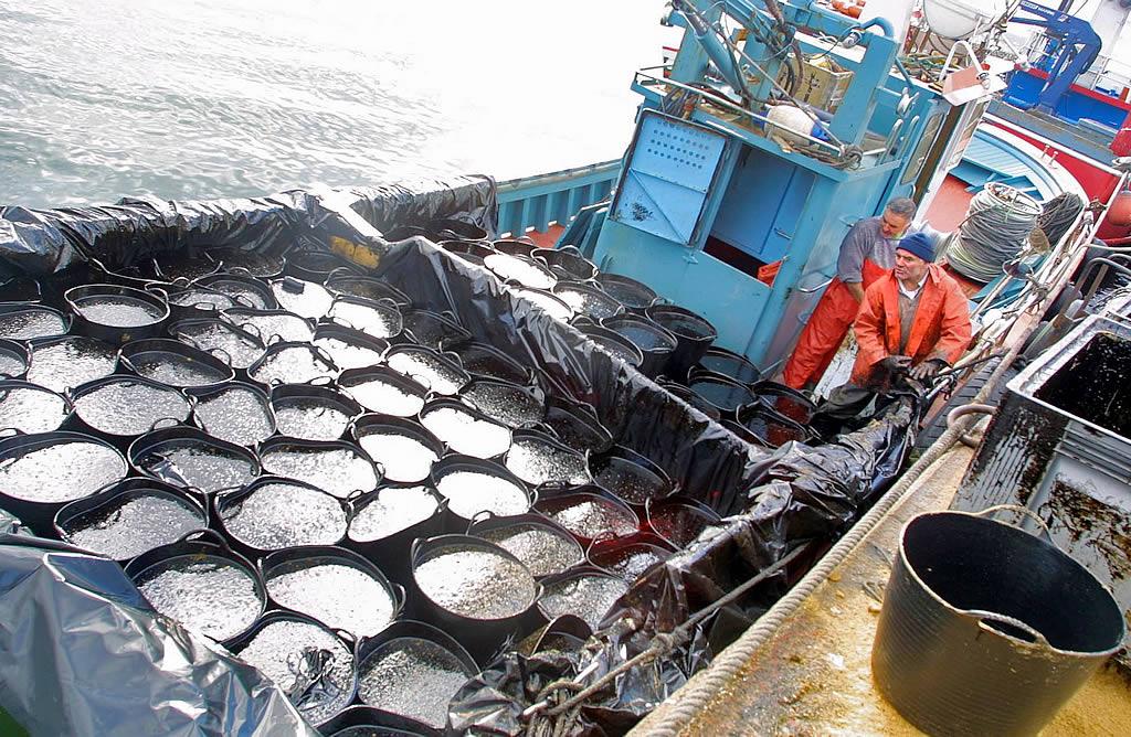 05/12/2002 <br>Muelle de Tragove, en Cambados. El capacho se convirtió en el símbolo de la lucha de David contra Goliat <br>Martina Miser