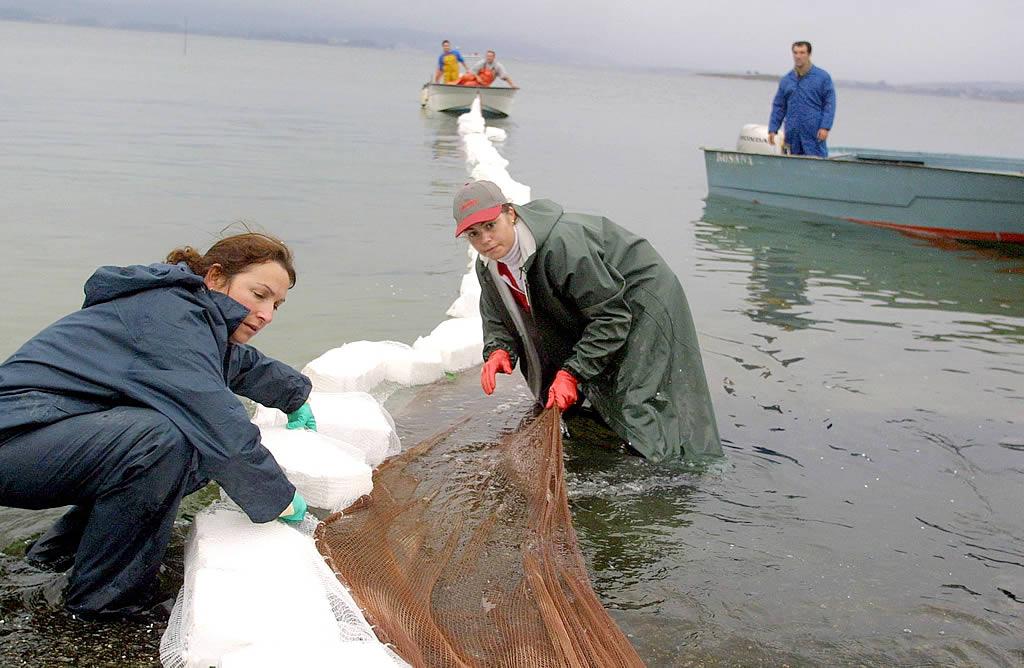 15/12/2002 <br>Playa de O Preguntoiro, Vilaxoán. Las mujeres idearon barreras anticontaminación totalmente artesanales <br>Martina Miser