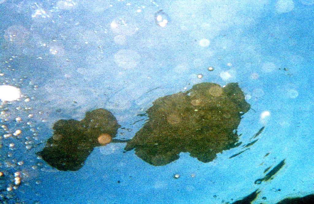 Galleta de chapapote a tres metros de profundidad <br>Marcos Rodríguez
