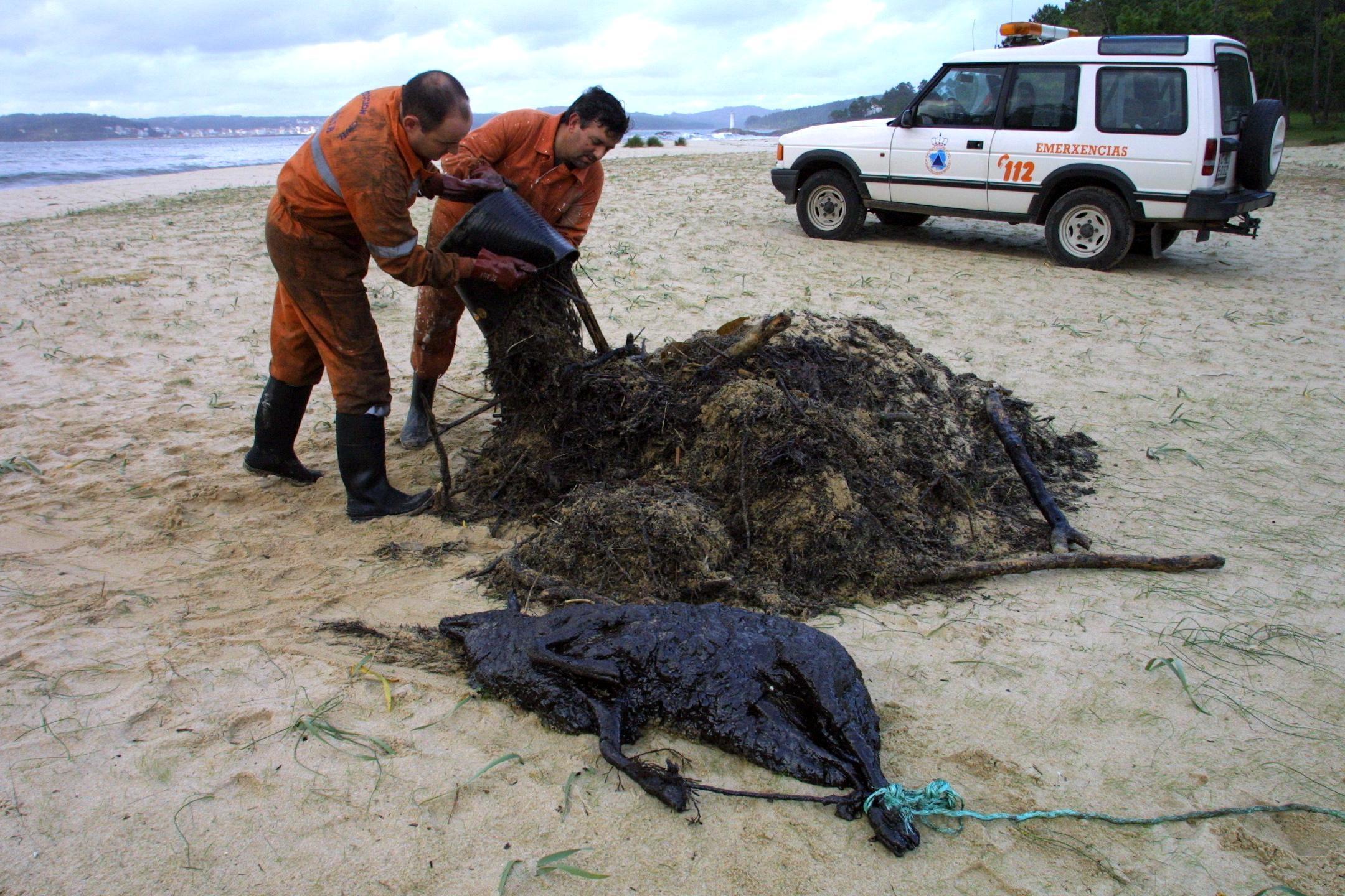 Hasta los animales terrestres sucumben a la marea negra. Dos miembros de Protección Civil recogen el cadáver de una oveja cubierta de petróleo en la playa de O Lago, en Muxía. <br> <b>José Manuel Casal</b>