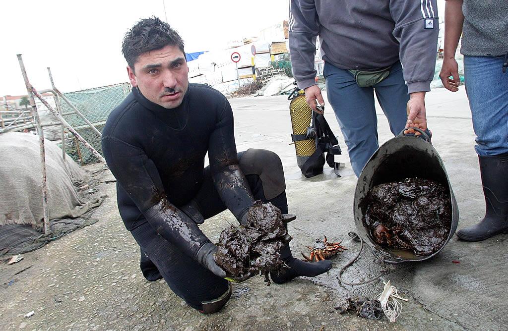 Un buceador muestra crustáceos empapados en fuel en San Felipe (Ferrol). <br><b>José Pardo</b>