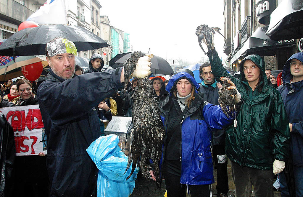 Un ecologista muestra los restos de un ave víctima del fuel <br>Xoan A. Soler